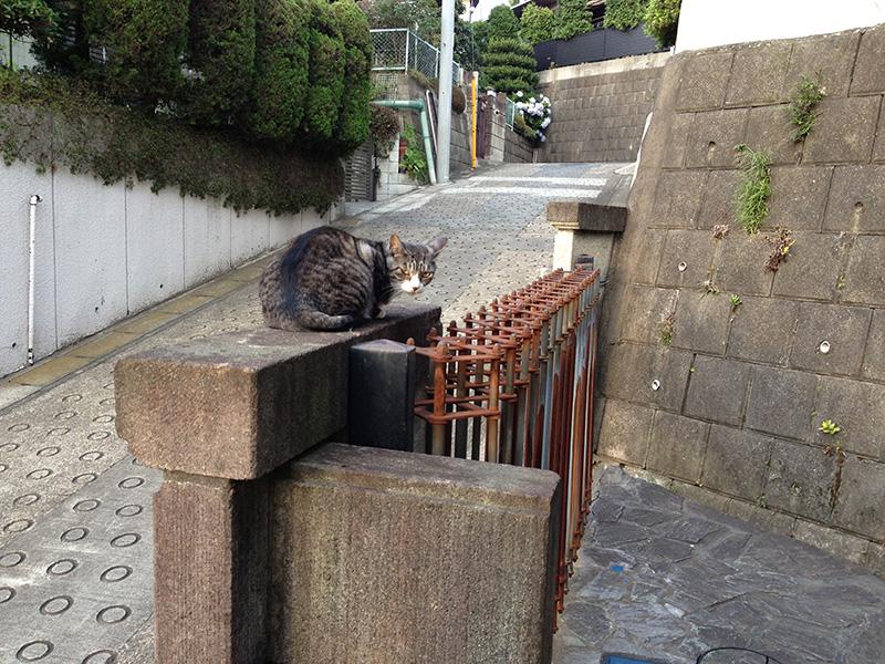 お向かいの猫